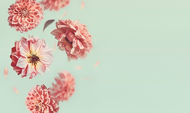 flowers-banner-medium-bottom